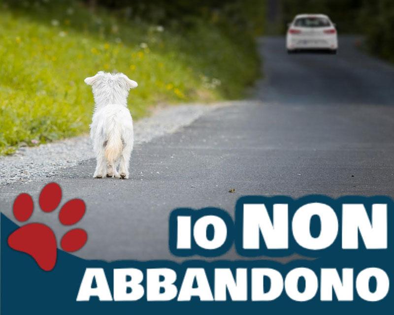 Campagna Farzovet contro abbandono animali