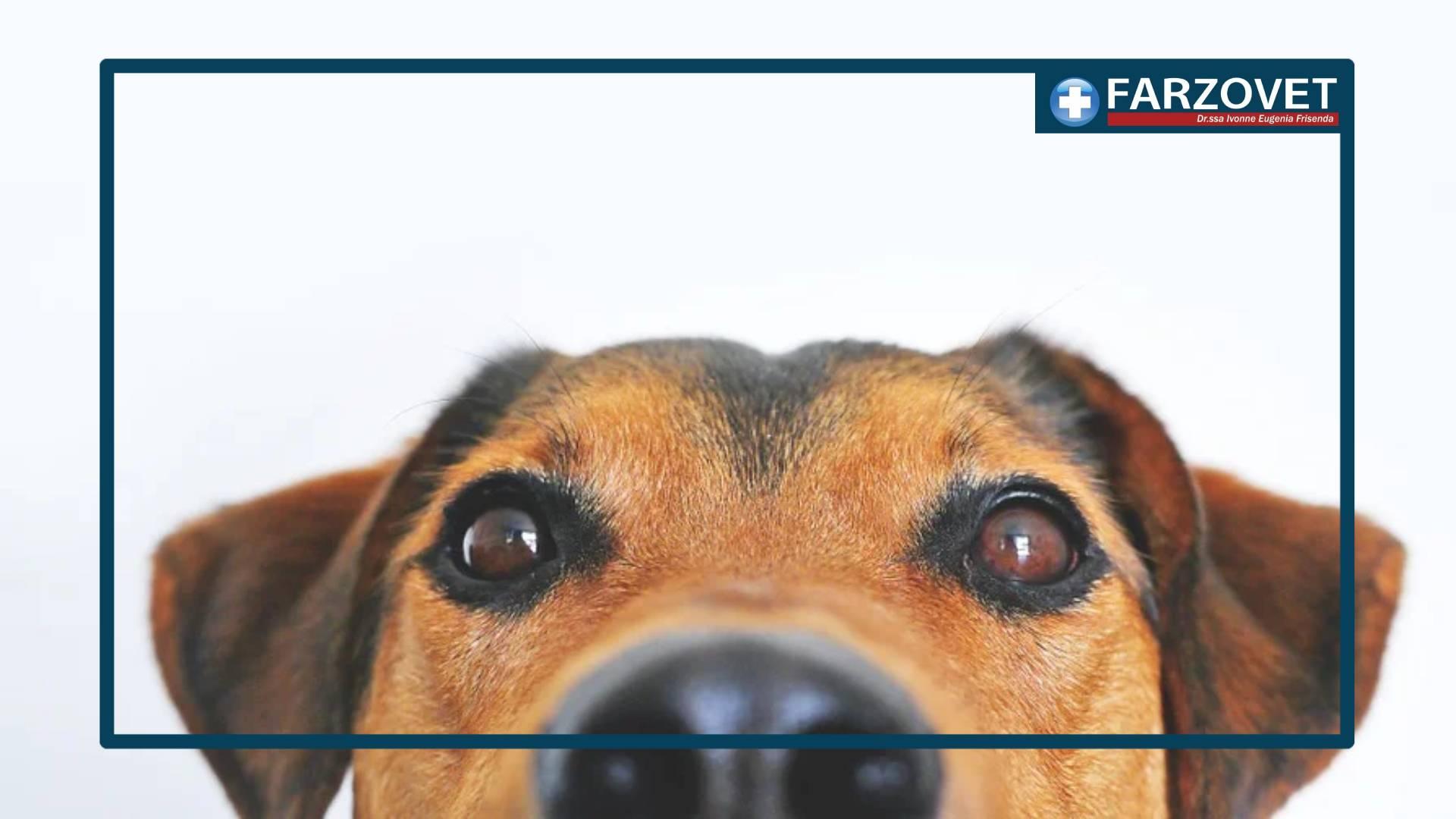 VOLANTINO NEGOZIO PER ANIMALI CROTONE FARZOVET