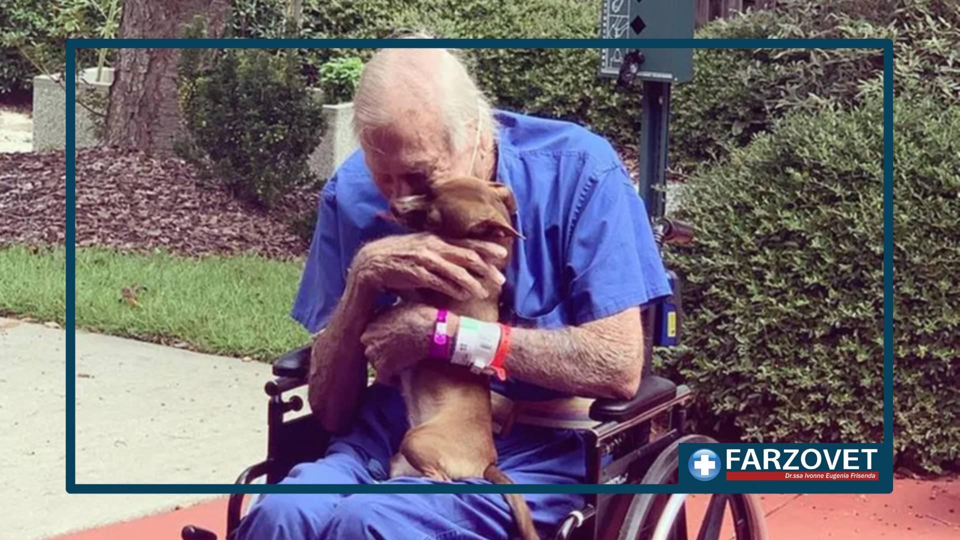 Cane salva padrone - negozio per animali crotone